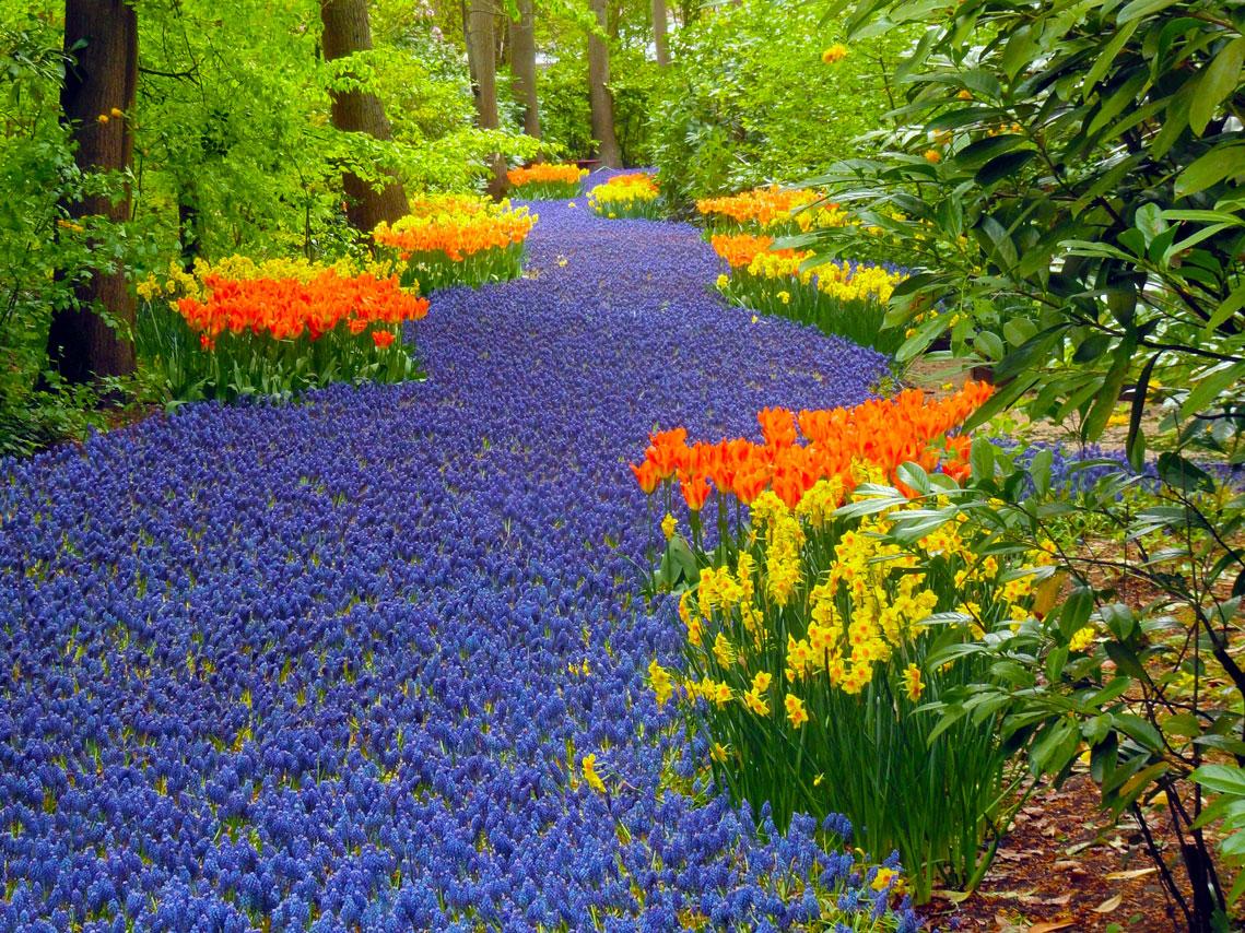 Keukenhof Gardens, Tyson K.