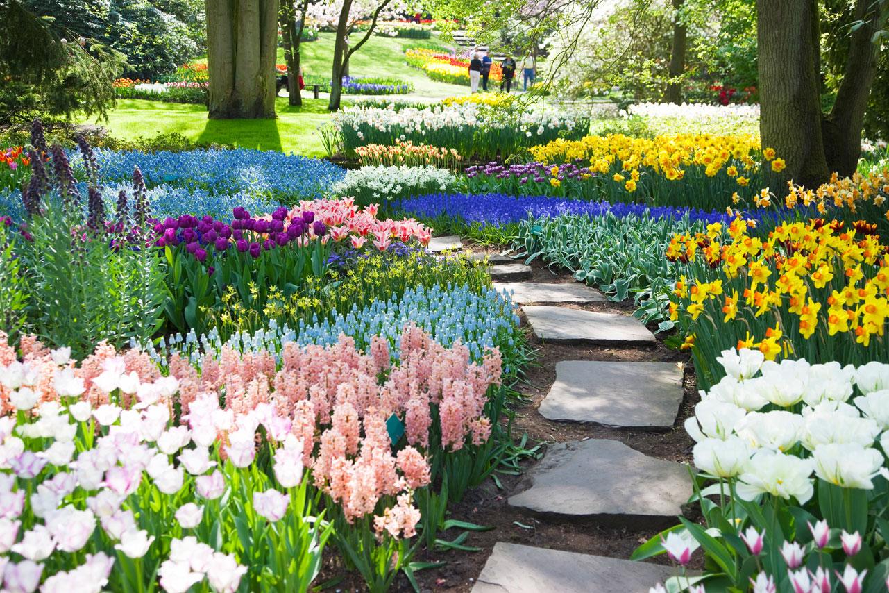 Perennial Flower Bed Plans