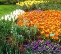 Tulip Gardens, Facebook Theresa T.